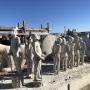 Le Musée subaquatique de Marseille : une immersion entre l'humain et la nature
